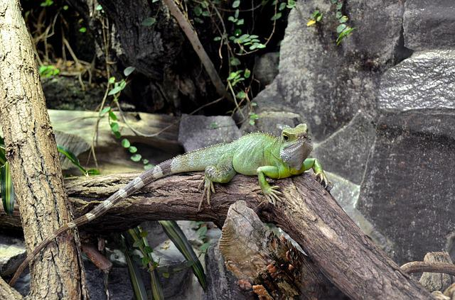Nature, Tree, Wood, Animal, Animal World, Lizard