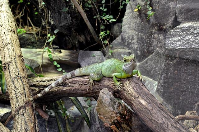 Nature, Tree, Wood, Animal, Animal World, Lizard