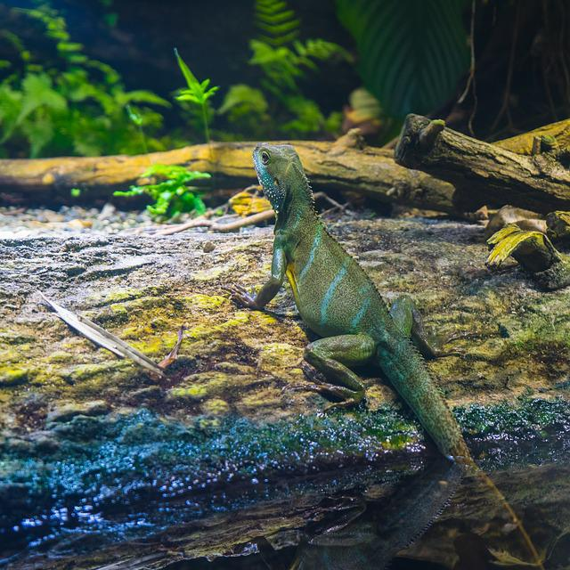 Lizard, Reptile, Nature, Animal World, Animal, Zoo