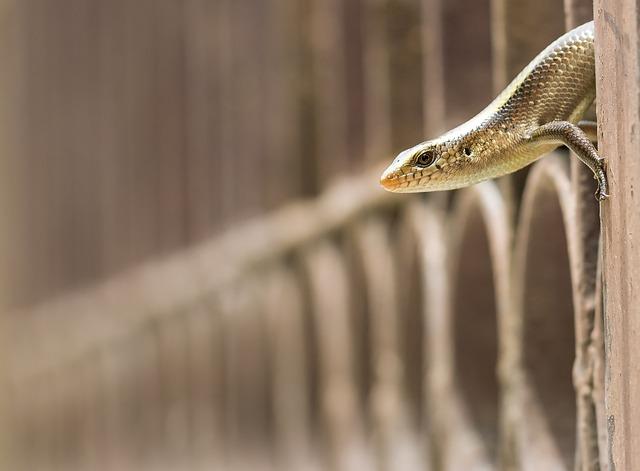 Skink, Lizard, Reptile, Sunskink, Pale-flecked, Garden