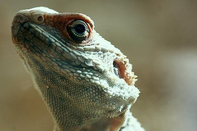 Lizard, Reptile, Animal, Nature