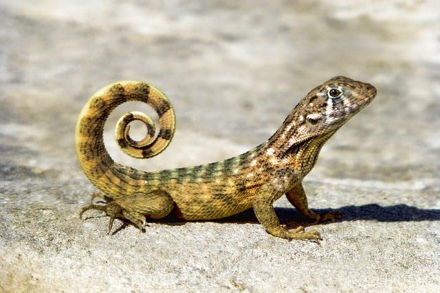 Reptile, Nature, Animal, Animal World, Lizard