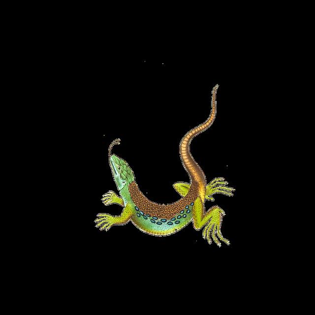 Lizard, Reptile, Animal, Isolated, Vintage