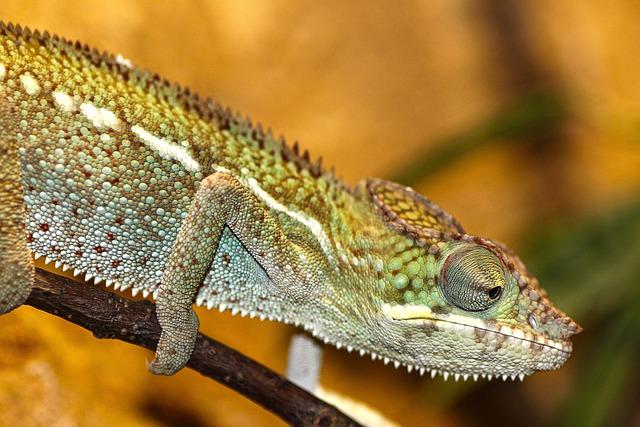 Chameleon, Zoo, Reptile, Lizard, Scale, Scaly, Jungle