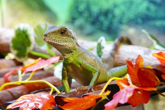 Chinese Water Dragon, Lizard, Dragon, Water, Animal