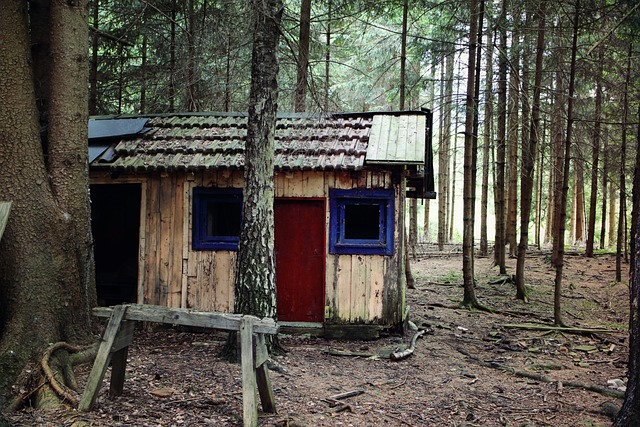 Hut, Forest, Log Cabin, Forest Lodge, Old, Neglected