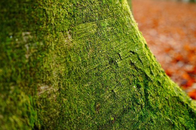 Log, Beech, Green, Tree, Tribe, Bark, Forest
