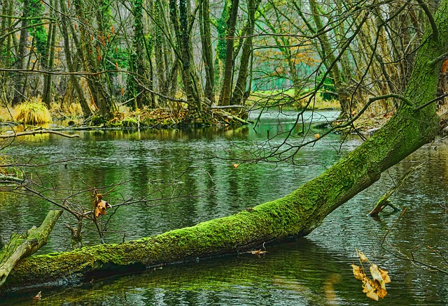 Waters, Nature, Wood, Forest, Log, River, Reflection