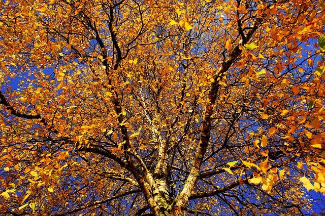 Tree, Birch, Late Autumn, Nature, Log, Aesthetic, Bark