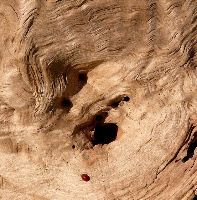 Wood, Nature, Tree, Strain, Logs, Trunk, Texture