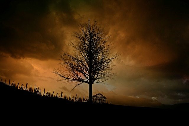 Tree, Landscape, Lonely, Mood, Mystical, Lone Tree