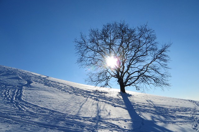 Winter, Munich, Olympic Park, Tree, Lonely, Snow