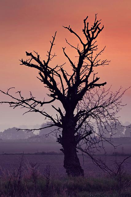 Tree, Dried, Lonely, Field, Dawn, Sunrise, Konary