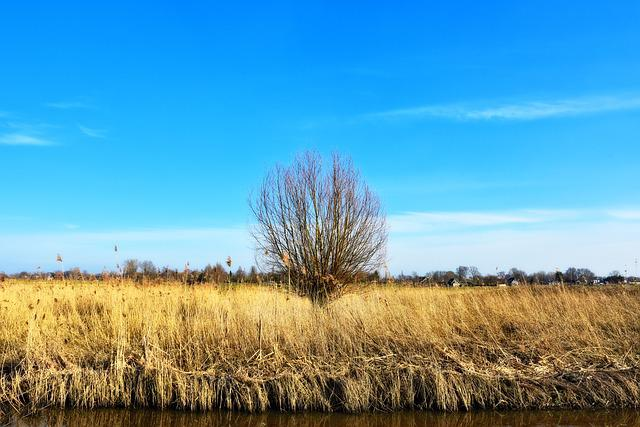 Reed, Wetlands, Tree, Lonely Tree, Landscape