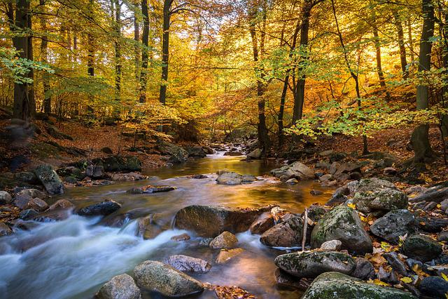 Fall Foliage, Ilse, Long Exposure, Autumn, Mood, Nature