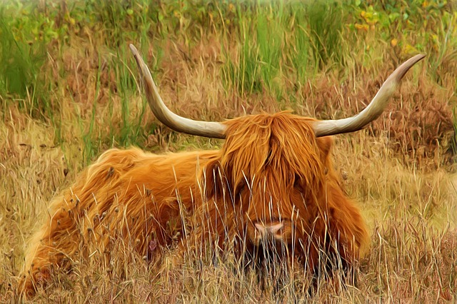 Painting, Oil Painting, Photo Painting, Beef, Long Horn