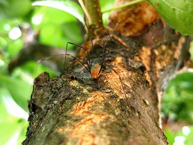Spider, Legs, Long Legs, Nature, Evil, Horror