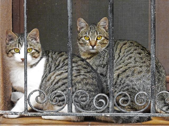 Cats, Grating, Look, Window