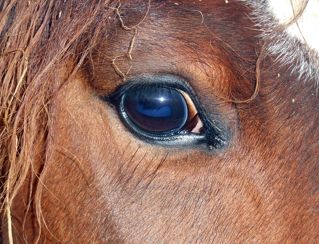 Horse Eye, Horse, Close Up, œil, Eyelashes, Look