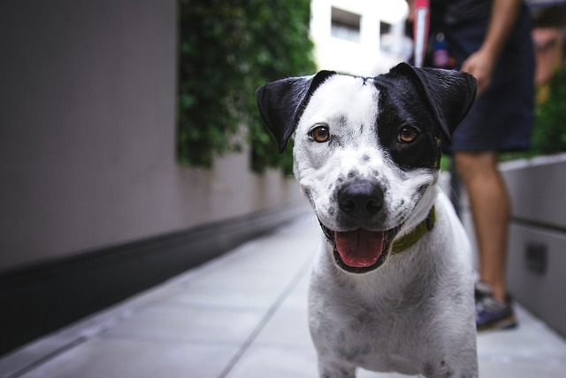 Dog, Pet, Canine, Dog Breed, Animal, Breed, Looking