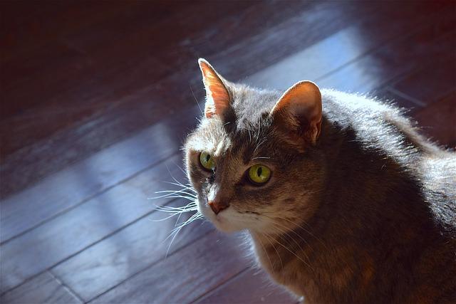 Cat, Portrait, Cute, Animal, Furry, Fluffy, Looking