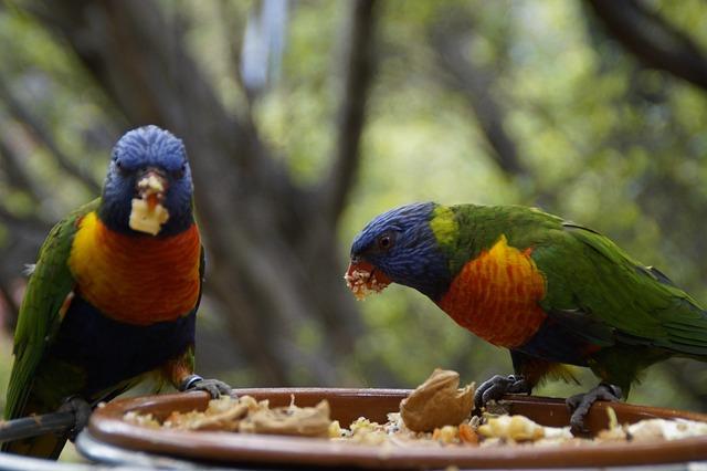 Lori, Eat, Loro Park, Zoo, Bird Aviary, Two, Pair