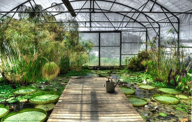 Lotus, Greenhouse, Waterlily, Garden, Pond, Exotic