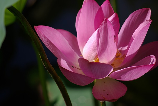 Fresh, Plant, Flowers And Plants, Natural, Green, Lotus