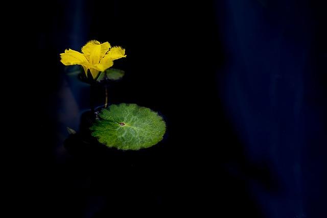Flowers, Lotus, Nature, Pond, Plants, Buddhism