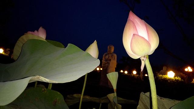 Flower, Lotus Flowers, Lotus, Large Leaf, Lotus Purple
