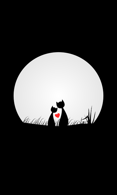 Cats, Love, Night, Moon, Black Background, Wallpaper