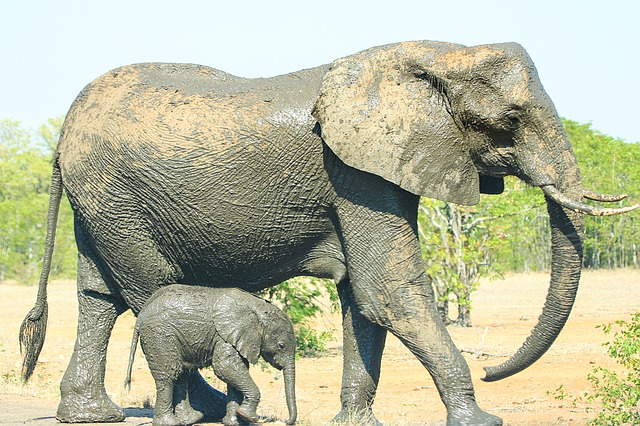 Mother, Child, Elephant, Love, Nature, Mama, Young