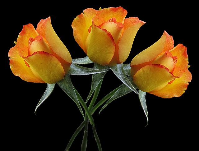 Flowers, Roses, Bouquet, Bouquet Of Roses, Plant, Love