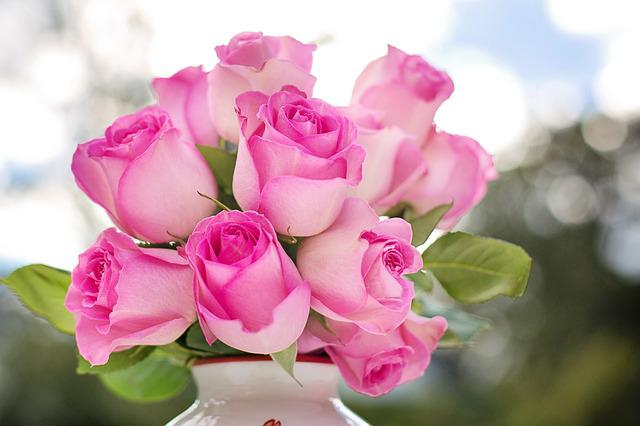 Pink Roses, Roses, Flowers, Romance, Romantic, Love