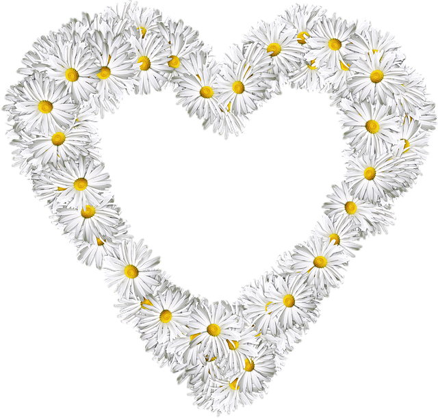 Heart, Flowers, Png, Love, Valentine, Daisies