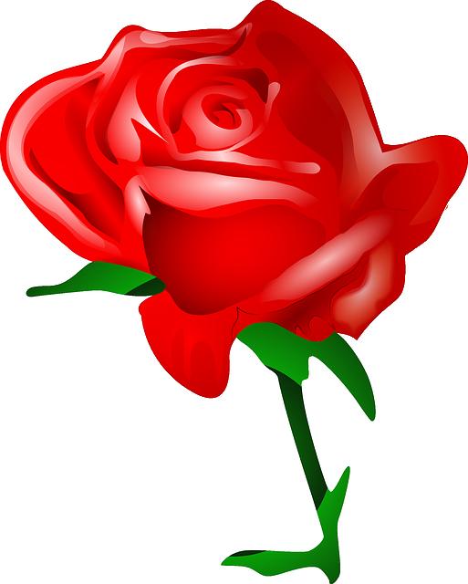 Rose, Flower, Love, Romantic