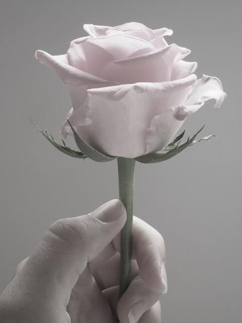 Flower, Desktop, Nature, Romance, Pretty, Soft, Love