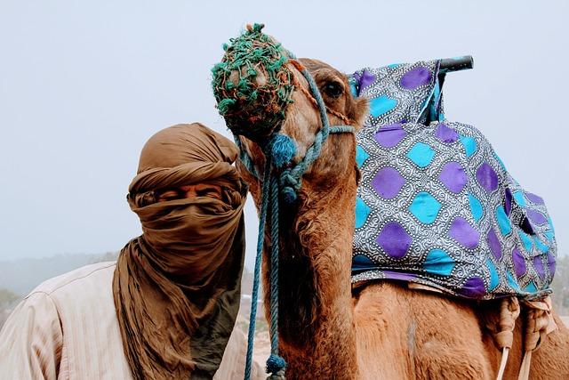 Camel, Camel Love, Love, Tourism, Morocco