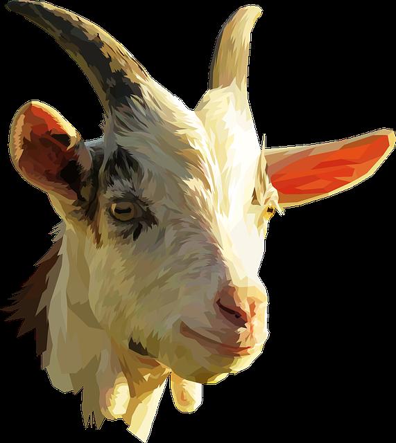 Goat, Low Poly, Animal, Farm, Head