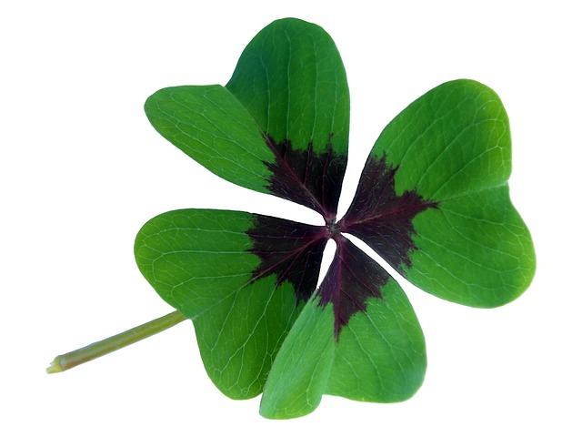 Lucky Clover, Klee, Luck, Four Leaf Clover, Lucky Charm