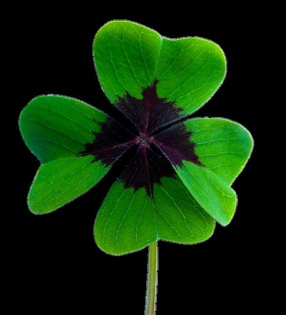 Luck, Four Leaf Clover, Vierblättrig, Lucky Charm