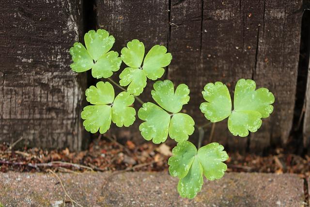 Klee, Shamrocks, Garden Fence, Green, Lucky Charm
