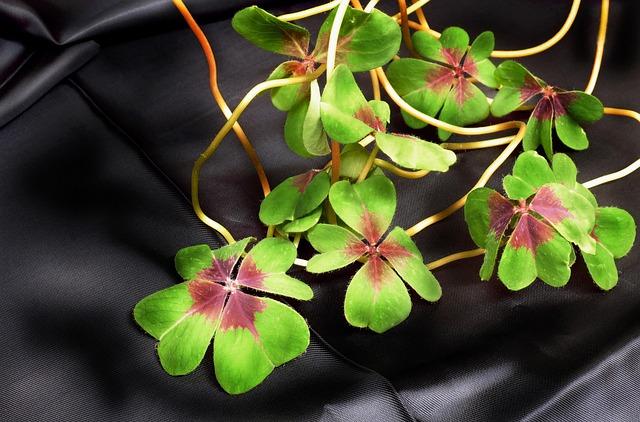 Klee, Shamrocks, Vierblättrig, Lucky Clover, Plant