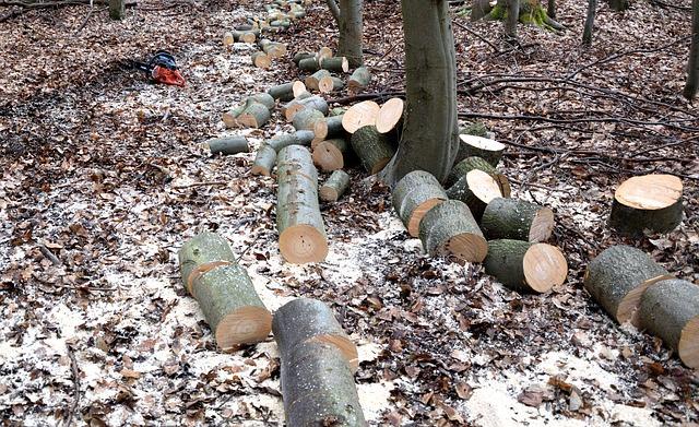 Lumberjack, Woodworks, Tree Trunks, Lumber