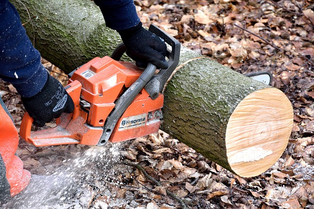 Cutting Wood, Lumberjack, Chainsaw, Woodworks