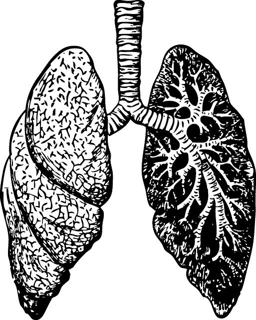 Lungs, Organ, Diagram, Human
