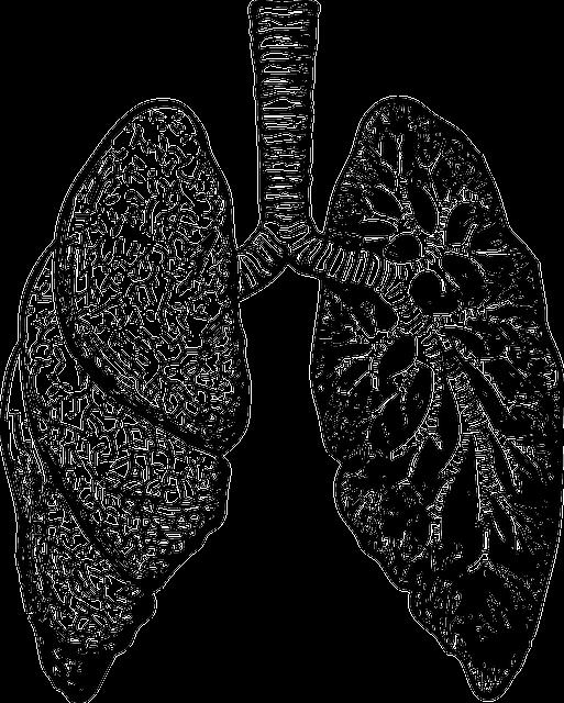 Lungs, Organ, Diagram, Human, Medicine, Biology