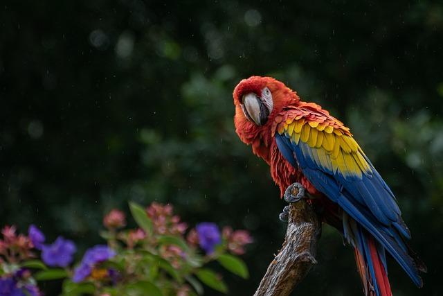 Macaw, Parrot, Bird, Cacatua, Cockatoo, Animal, Avian