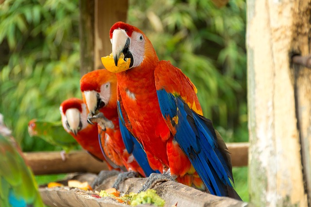 Parrot, Macaw, Bird, Feather, Wildlife, Animal