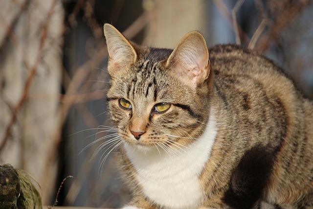 Cat, Kitten, Young Cat, Mackerel, Domestic Cat, Mieze
